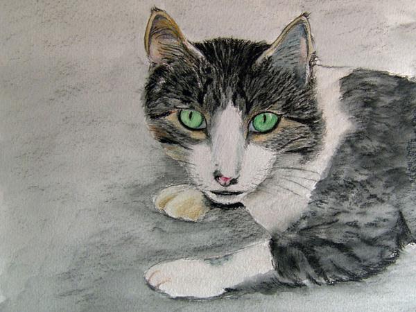 Chat aux yeux verts, crayon aquarelle, 30x21cm, d'après une photo prise par Azadelle dans les Cyclades.