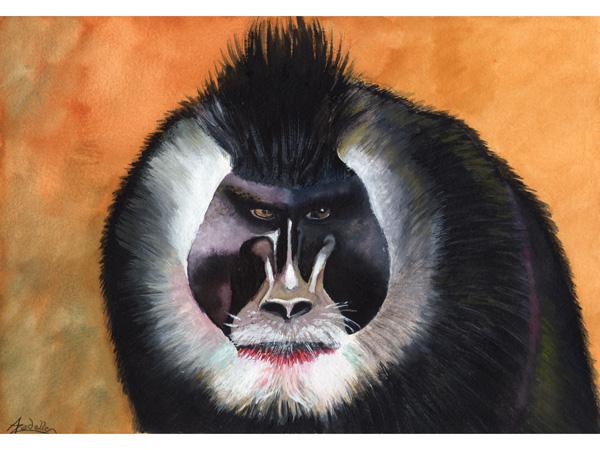 Drill, aquarelle, 21x30 cm, d'après un cliché du batteur et photographe animalier Pierre de Chabannes, Marquis de La Palice (<a href=http://www.photozoo.org target=_new>www.photozoo.org</a>).