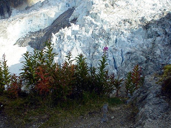 Glacier d'Argentière, septembre 2002.