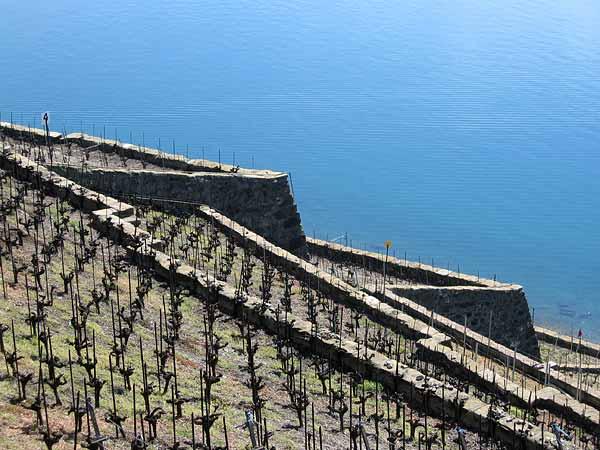 Lavaux: des vignobles près d'Epesses...