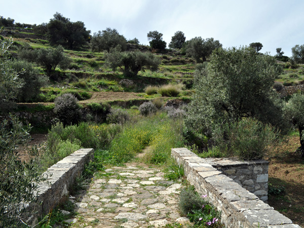 Paros, Cyclades, avril 2012. Balade sur l'ancienne route byzantine reliant Lefkes et Prodromos.