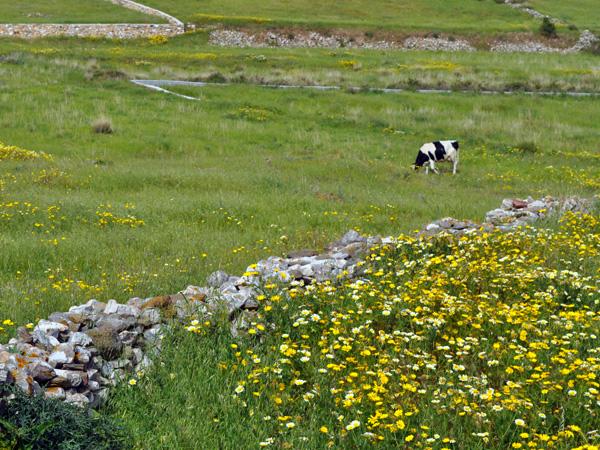 Paros, Cyclades, avril 2012, balade sur l'ancienne route byzantine reliant Lefkes et Prodromos.