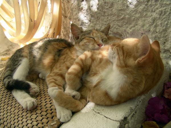 Paros, Cyclades, septembre 2007.