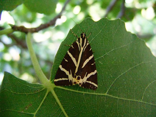 Paros, Cyclades, septembre 2009.