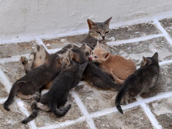 Au pays des 10 millions de chats, Paros, septembre 2011.