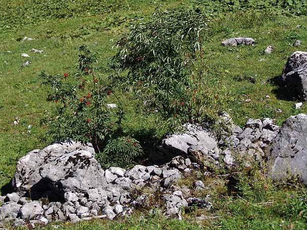 Dans les Préalpes fribourgeoises, au pied des Gastlosen, en Gruyère, août 2004.