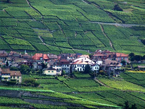 Le village d'Epesses niché dans les vignes, août 2004.
