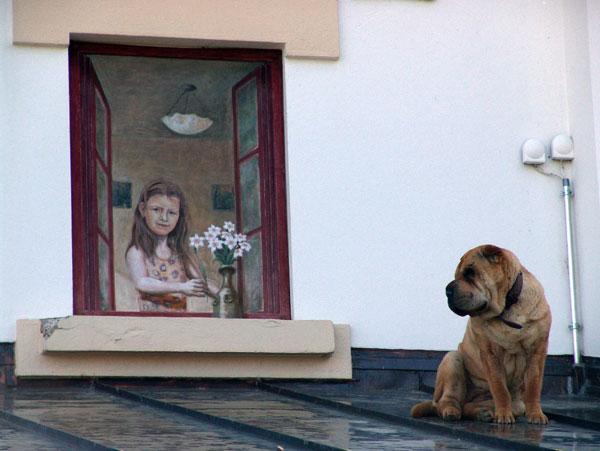 Scène de vie de chien à l'Hôtel des Sapins, aux Pléiades, mai 2010.