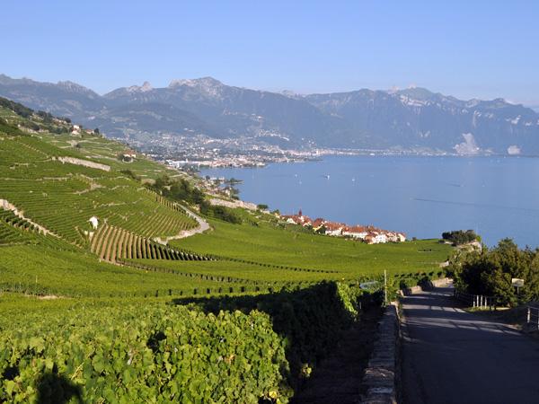 Vue sur le vignoble du Dézaley, le village de Rivaz et la Riviera, juillet 2010.