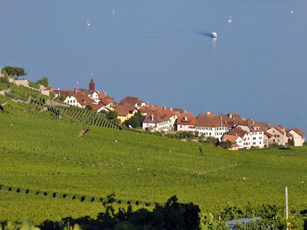 Vue sur le village de Rivaz en Lavaux, juillet 2010.