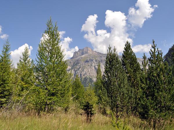 Le site naturel protégé de Derborence, au Valais, août 2010.