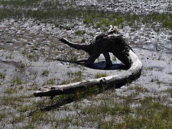 Comme un air de Jurassic Park dans le site naturel protégé de Derborence, au Valais, août 2010.