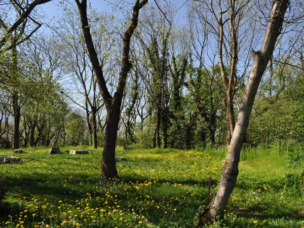 Over the hills of St-Triphon, a secret paradise in Chablais, Saturday, April 9, 2011.