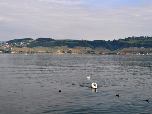 Lac de Morat, au sud des vignobles du Mont Vully, 8 mai 2011.