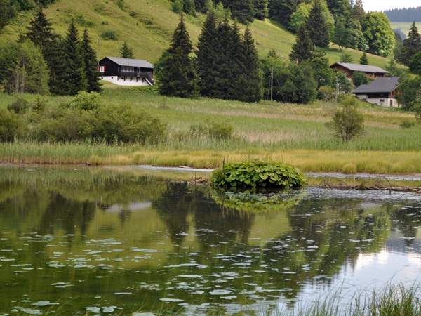 Le Pas de Morgins, un biotope à la frontière franco-suisse juste au-dessus de Morgins, 1er août 2011.