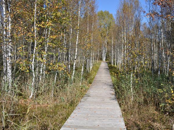 Sentier didactique du Marais Rouge consacré aux tourbières, Les Ponts-de-Martel, Jura neuchâtelois, automne 2011.