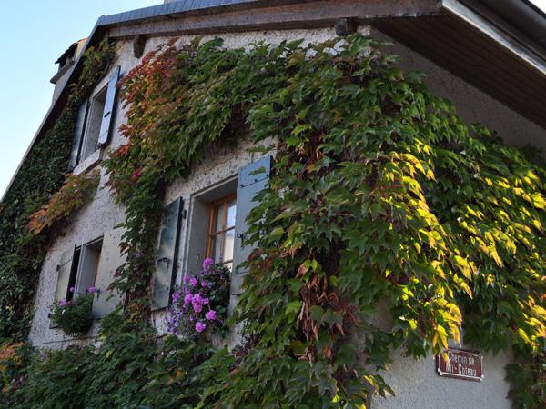 Couleurs d'automne à Féchy, sur La Côte, octobre 2011.