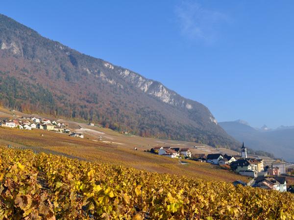 Couleurs d'arrière-automne du côté d'Yvorne, dans le Chablais vaudois, novembre 2011.