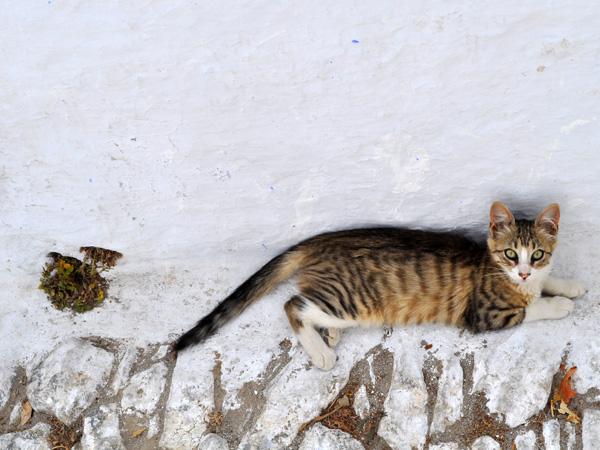 Amorgos (Cyclades), août 2013.