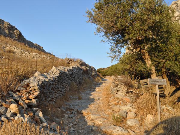 Près de Lagadha, Amorgos (Cyclades), août 2013.