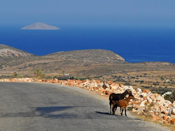 Naxos, août 2013. Sur la route de Moutsouna.