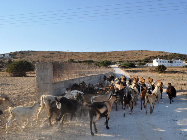 Au sud de Paros, septembre 2013.