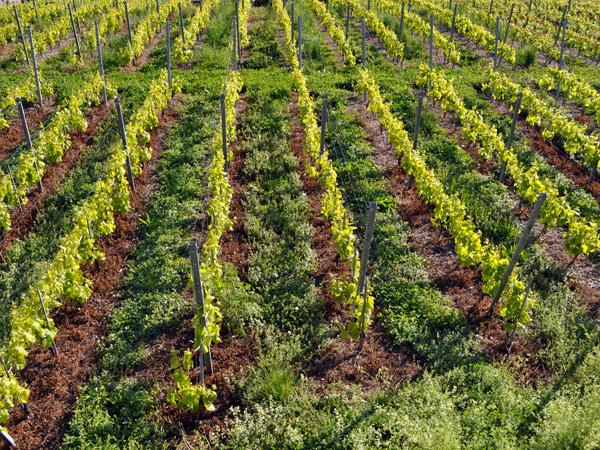 Treytorrens-en-Dézaley, hameau vigneron de Lavaux, mai 2014.