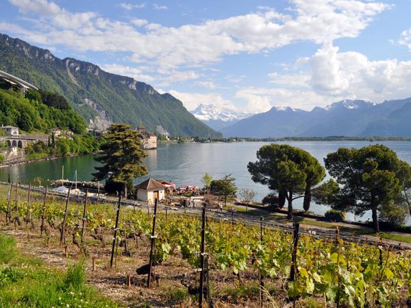 Clos de Chillon, the vineyard of Chillon Castle, Veytaux (east of Montreux), May 2014.