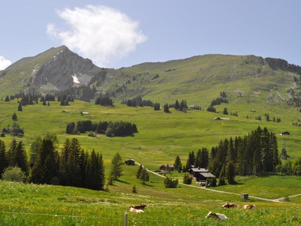 Sur la route du Col des Mosses, juin 2014.