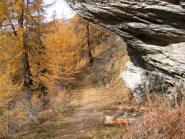 Paysage d'automne dans une forêt de mélèzes du Val d'Hérens (Valais).